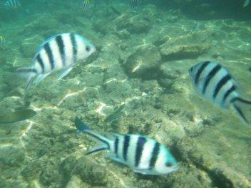 depth1