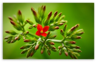 flower_buds_3-t2