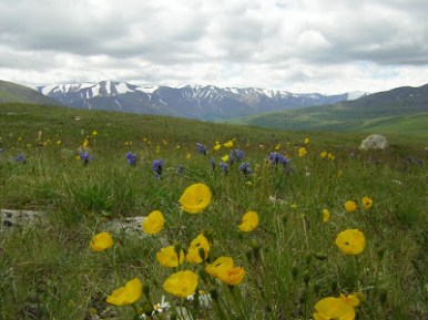 Altai-mountains-and-wild-meadow-Photo-Altai-Project4