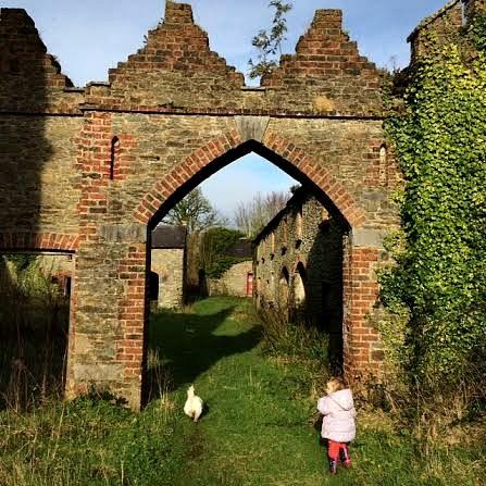 archway dog FIN