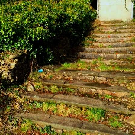 steps FIN