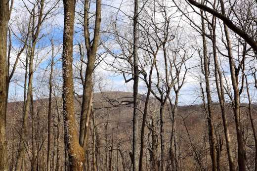 View of Springer Mountain