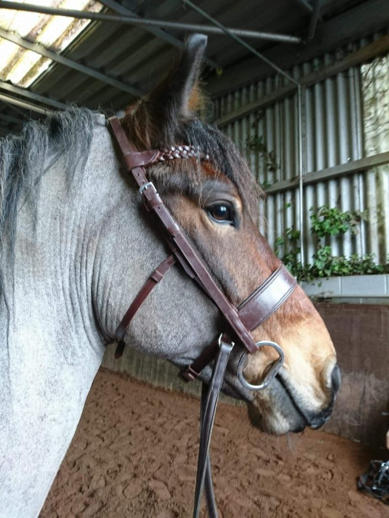 Bitless Bridle with Slip Head for a Snaffle Bit