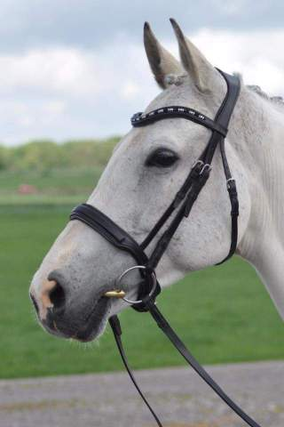 Correctly fitted Bridle