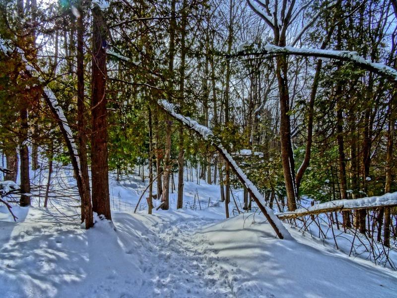 Eugenia Falls trail