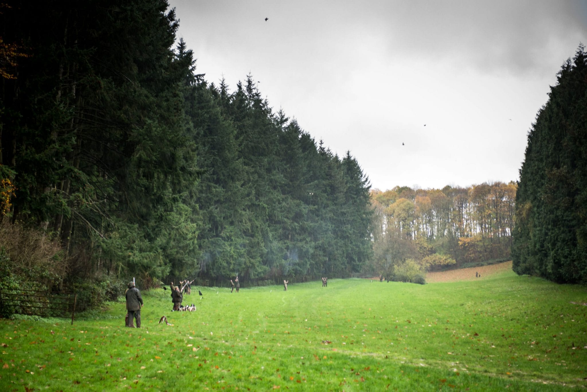 Sporting Agency Availability - A field of shooters and a sky full of game at Lady's Wood Shooting School