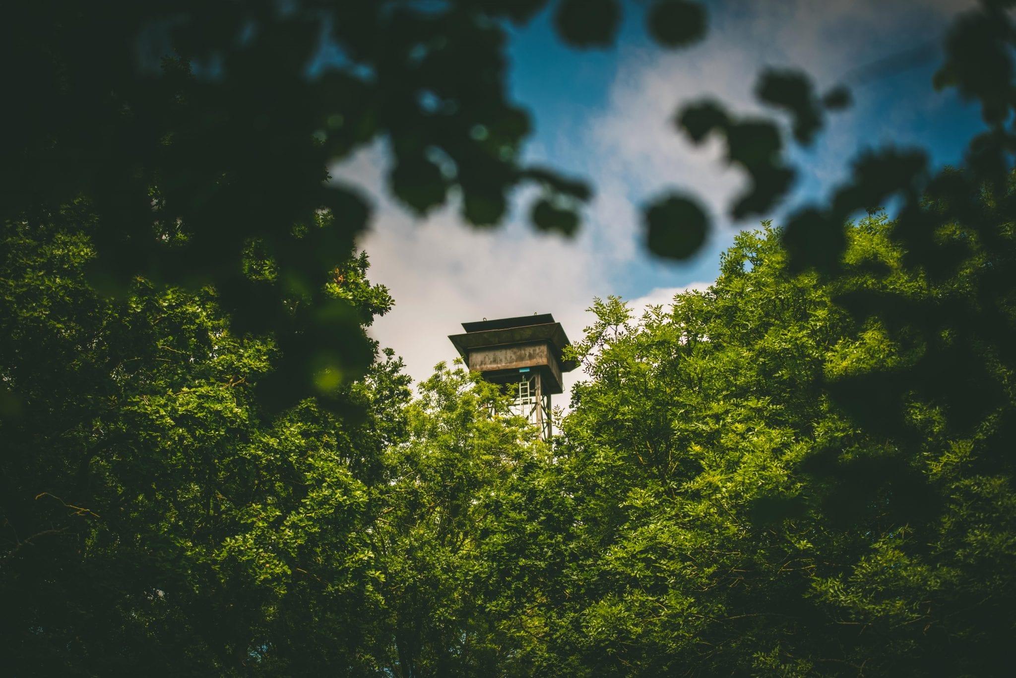 Lady's Wood high tower peeking through the trees