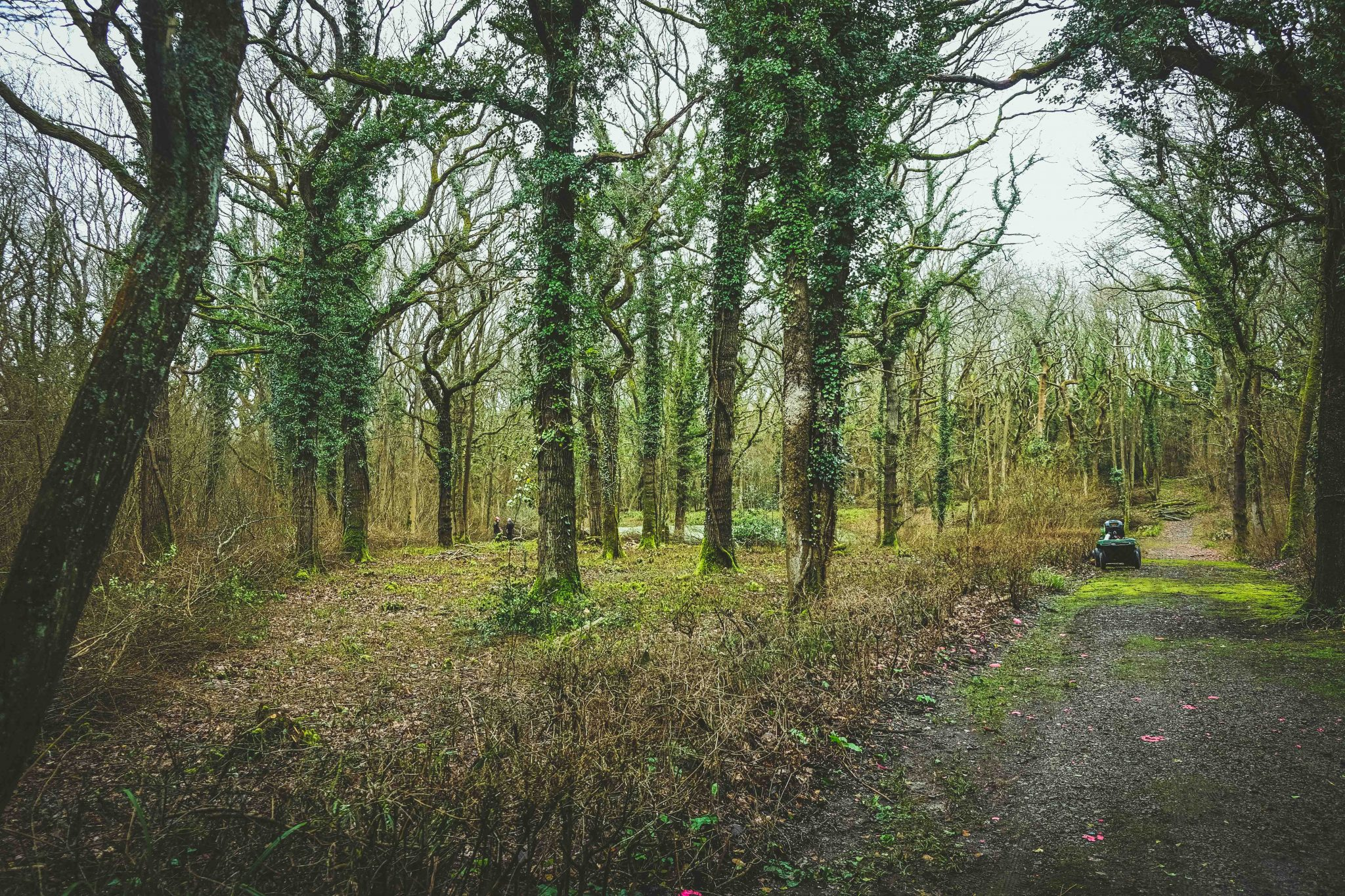 Coppicing in the woods at Lady's Wood