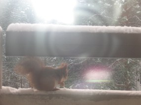 Squirrel in the balcony
