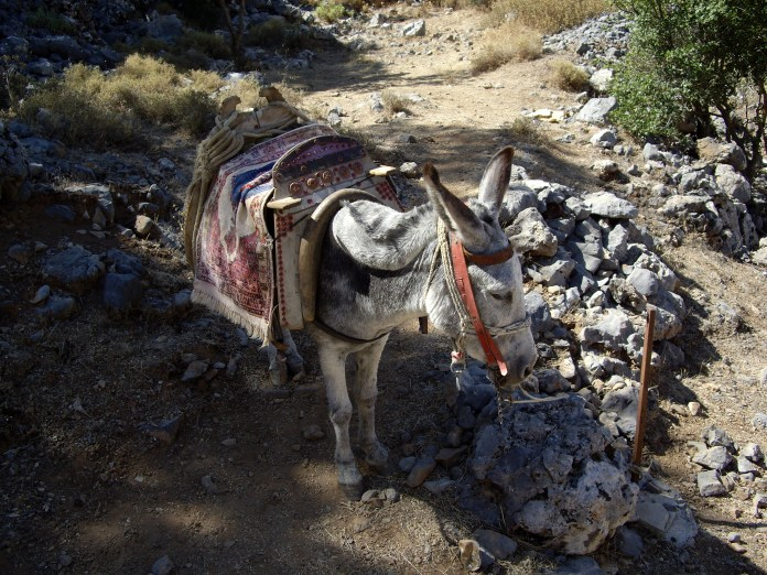 Donkey at the Cave of Zeus