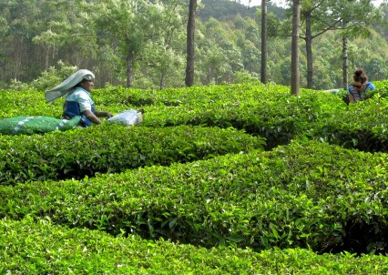 Me and tea picker in Munnar.
