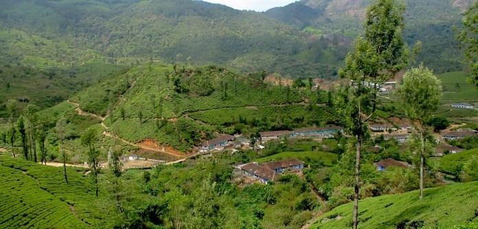 Tea plantations in Munnar.