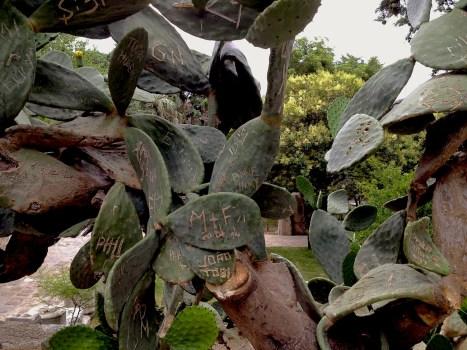 Everlasting love, incised in the cactus. The Bodrum Castle