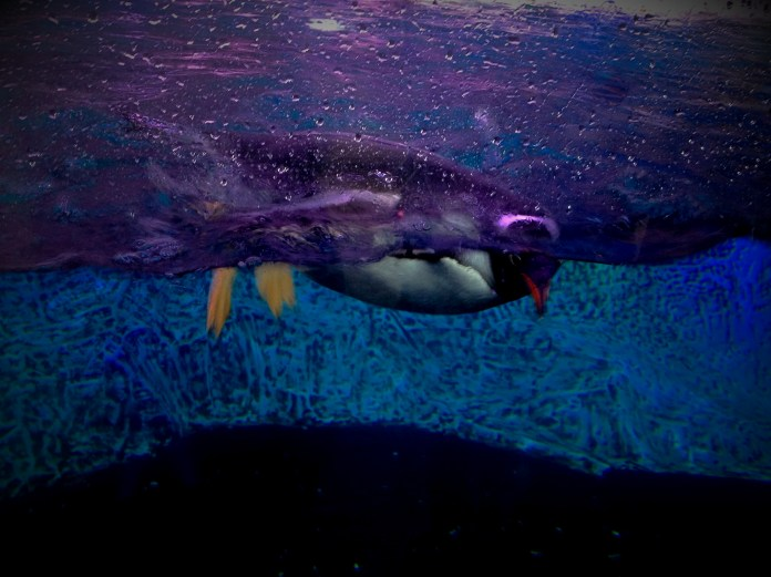 Outside aquarium with live penguins in Legoland