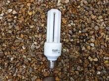 5. Reptile bulb