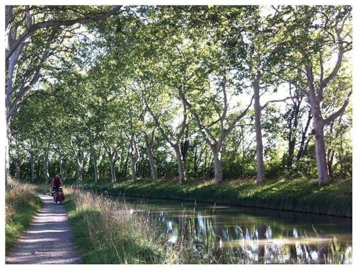Canal du midi, sus plataneros y la cargo bike Bullitt al fondo