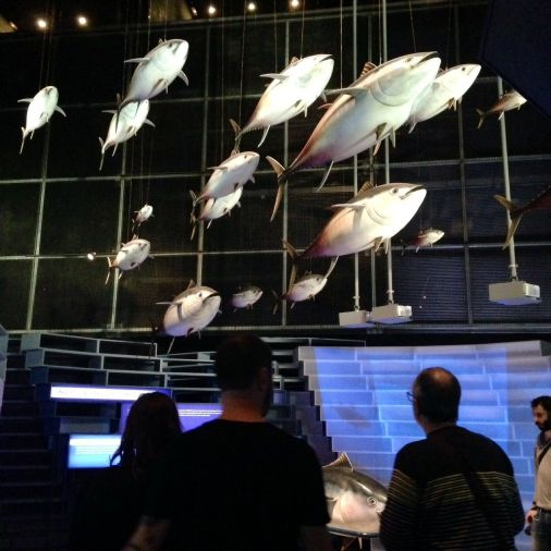Bancos de atunes, en continua reducción