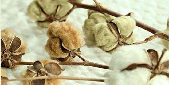 Flores de algodón ecológico de tres tonos naturales
