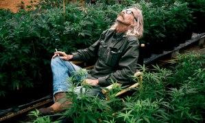 Se dispara el consumo de mariguana en California