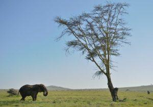 La Tierra perdió 60% de sus animales salvajes en 44 años: Fondo Mundial para la Naturaleza