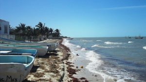 """Un gringo va más allá de Trump y levanta un """"muro"""" para cerrar una playa frente a su casa…pero en México"""