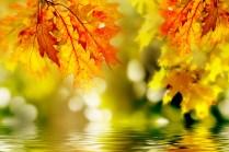 foto otoño 2