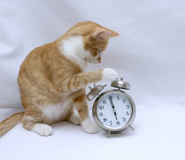 cat-and-clock