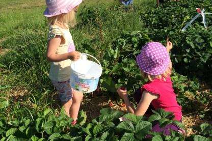 ...und die Kinder haben fleißig geholfen, zu ernten!