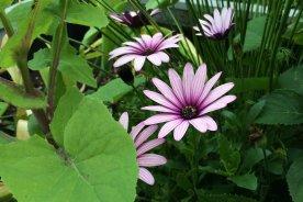 Unbekannte Blume im Ländchenlust-Garten
