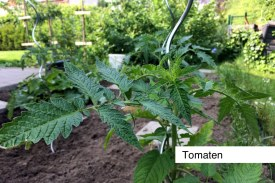 tomaten2016