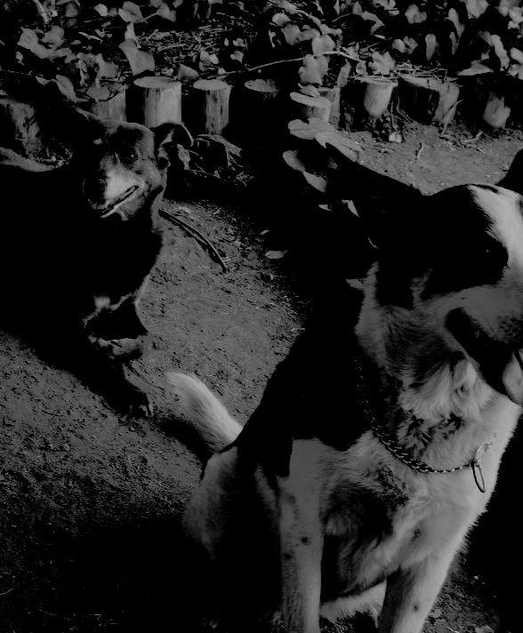 """De perros que saben que sus amos están camino de casa"" de Rupert Sheldrake"