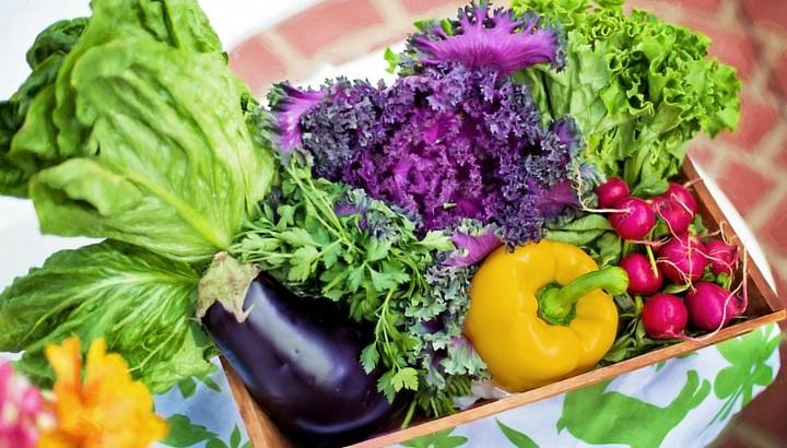 Cursos online de Stanford: Cocina y Nutrición para los más Chicos ...