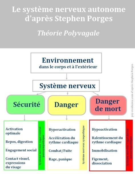 Théorie polyvagale Stephen Porges