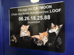 Collaboration avec la chatterie Catmoon
