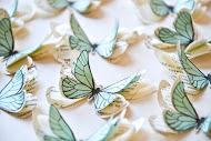 aqua-butterflies-2