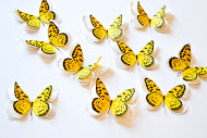 yellow-butterflies