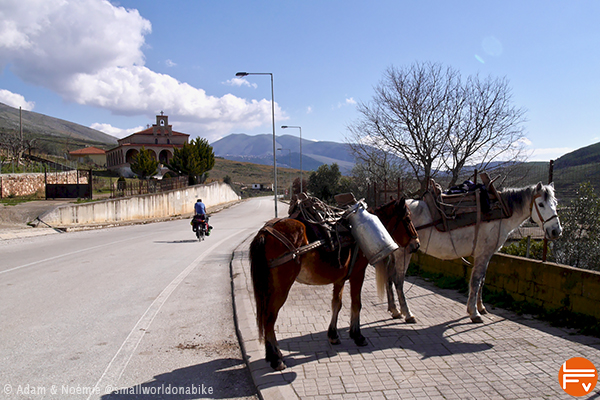Two mules along a road in Albania