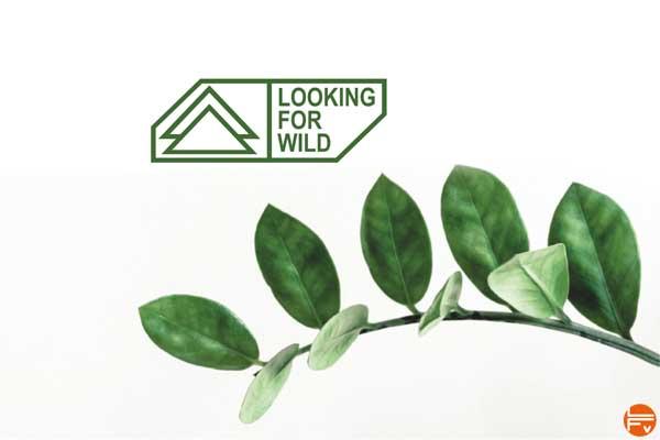 fabrique verticale_Eco responsable looking for wild marque vetements escalade