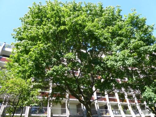Des arbres comme voisins (Balladur)