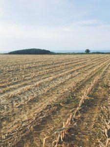 Les champs à Yport