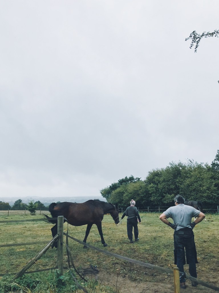 Danielle, le Maréchal et le cheval