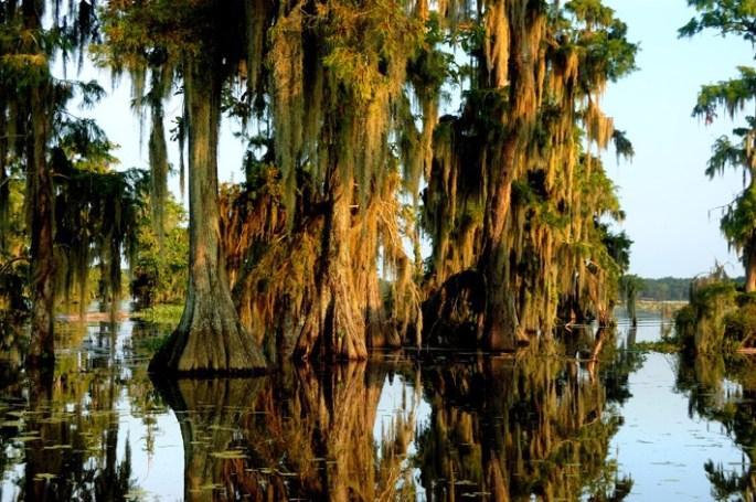 About Lake Martin Louisiana