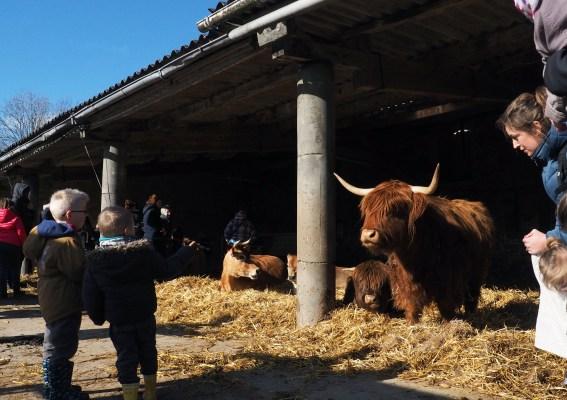 visite des vaches
