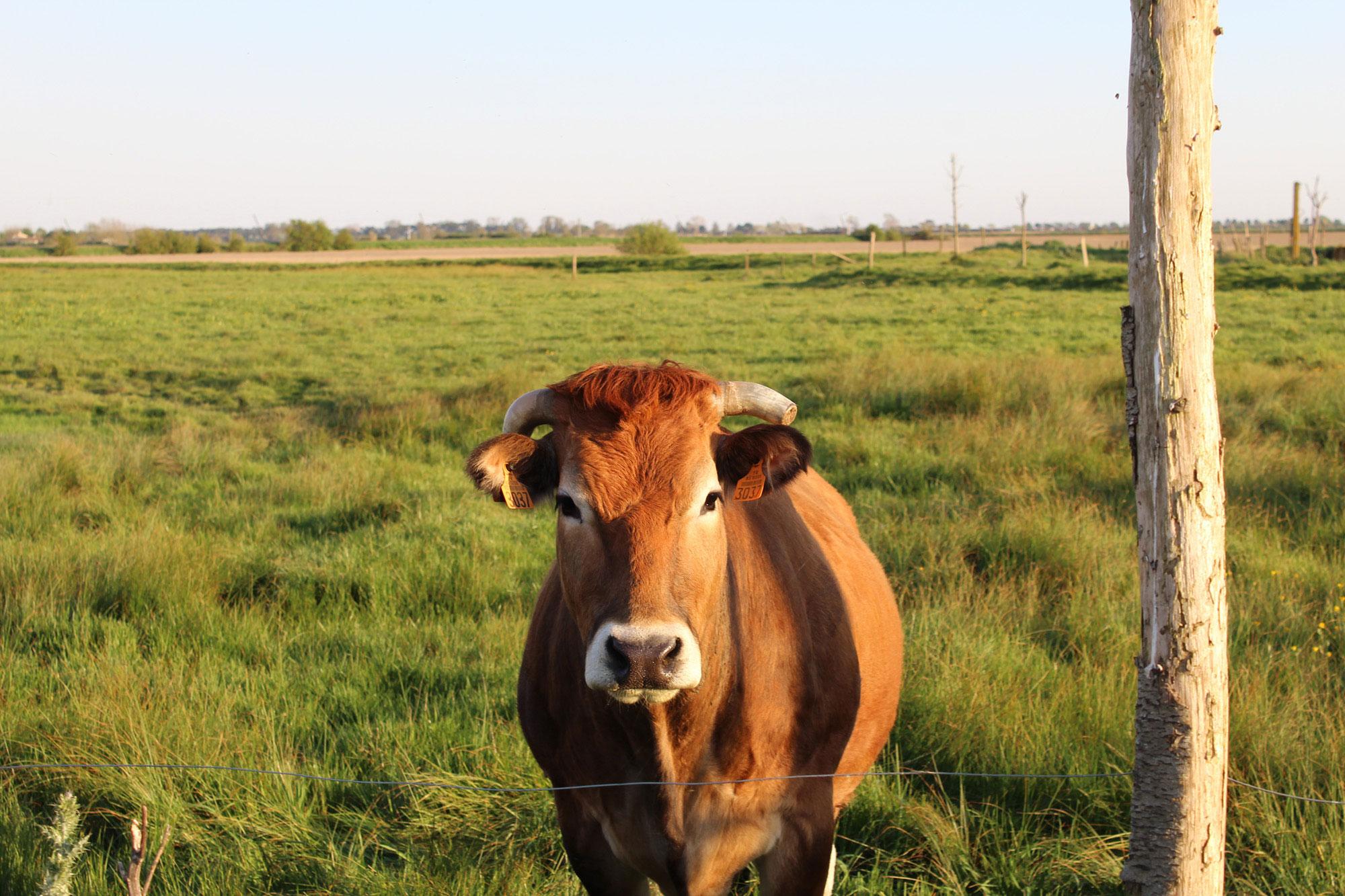 Vente directe de viande bovine du Clos Buet