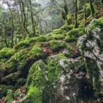 forêt de TRES CROUTS