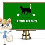 ferme pédagogique chat