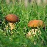 16 et 17 octobre : Journées Mycologiques