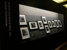 Exposition Robert Doisneau, un photographe au Muséum © Lovely Rita