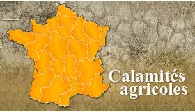 "Demander une indemnisation ""calamités agricoles"""