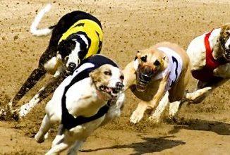 Corrida de cães